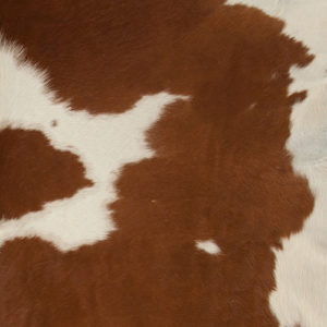 Exotic Brown and White Cowhide