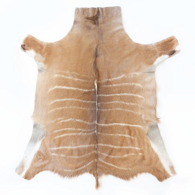 Kudu skin