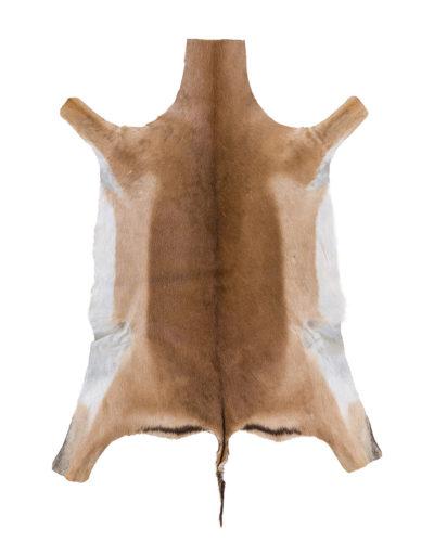Impala African Game Skin